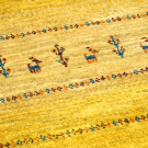 アマレ・廊下、キッチンサイズ・黄色・キャラバン・鹿・木・アップ画