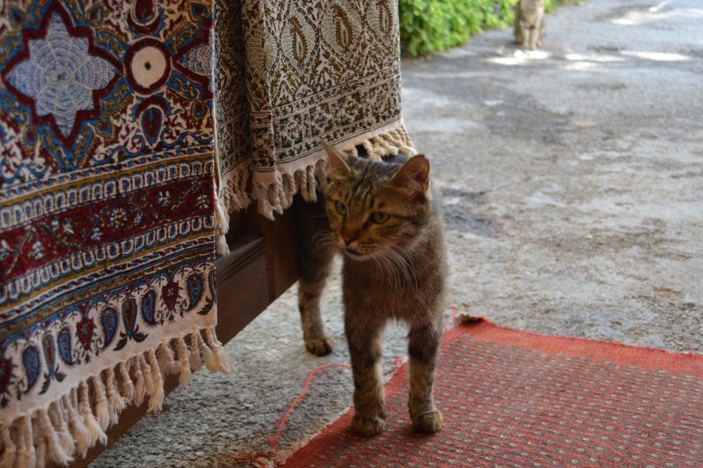 イランイスファハーンのバザールにある更紗工房の猫