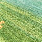 アマレ・玄関マットサイズ・緑色・鹿、花・アップ画